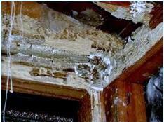 termite control service in singapore