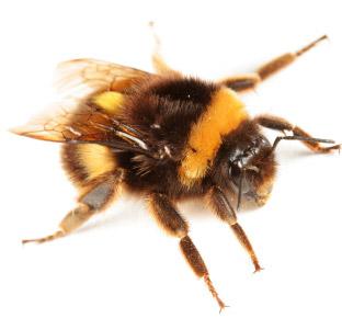 Carpenter Bee Control Service