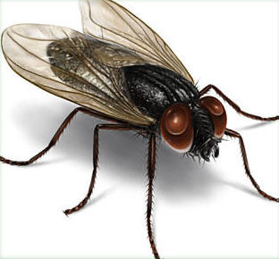 Housefly Control Service