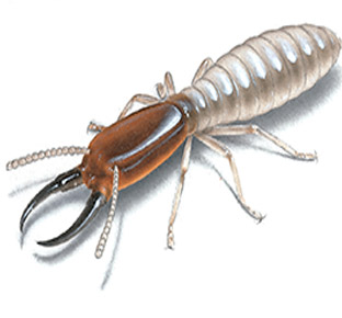 Domestic and Commercial Termite Control Services